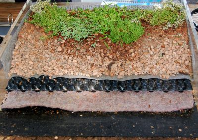 Construction_sample_of_a_green_roof_system